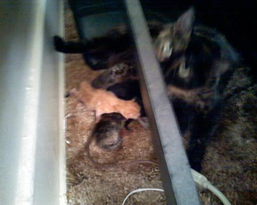 Kittens & mommy