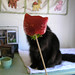 Strawberry Headed Cat by lisascenic