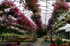 blooming garden center
