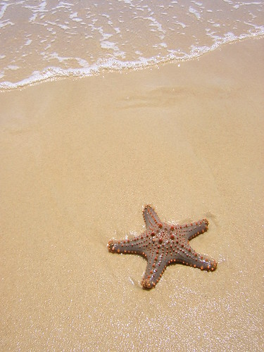 Summer the Starfish by Two Travellers