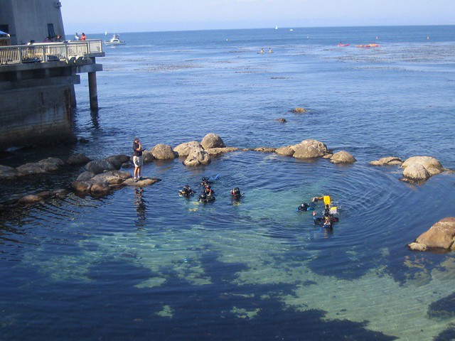 Kids swim in the tide pool at monterey aquarium flickr for Pool show monterey