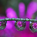 drops of purple petals by Steve took it