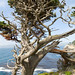 cypresses - Photo (c) Upsilon Andromedae, some rights reserved (CC BY)