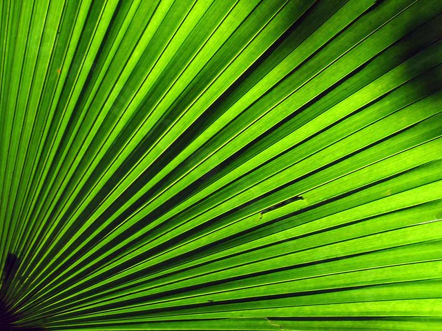 Palmtree Panic