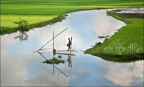 Fishing among the Paddy Field, Jamalpur, Bangladesh. Source: flickr/Michael Foley Photography http://www.flickr.com/photos/michaelfoleyphotography/340953955/