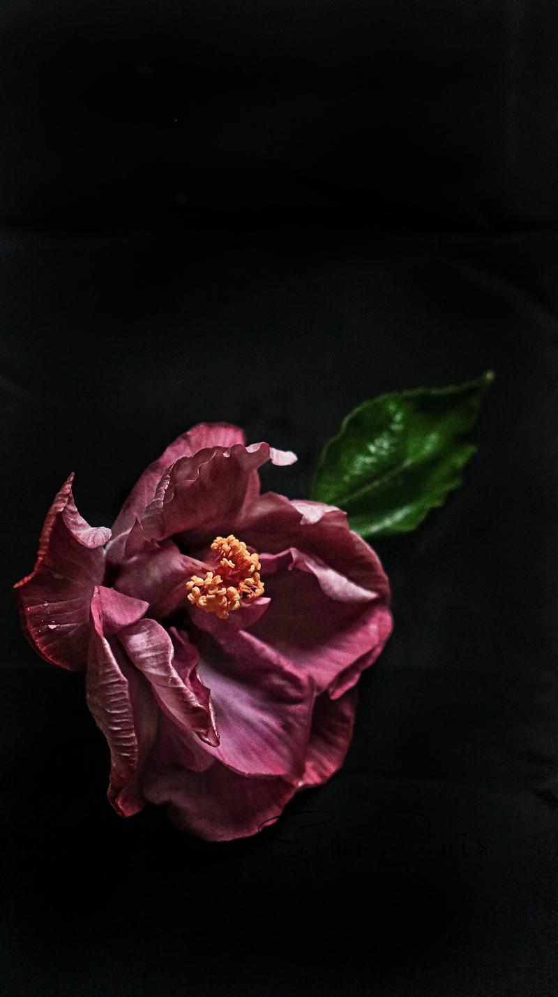 Pinkhybiscus-SimiJois