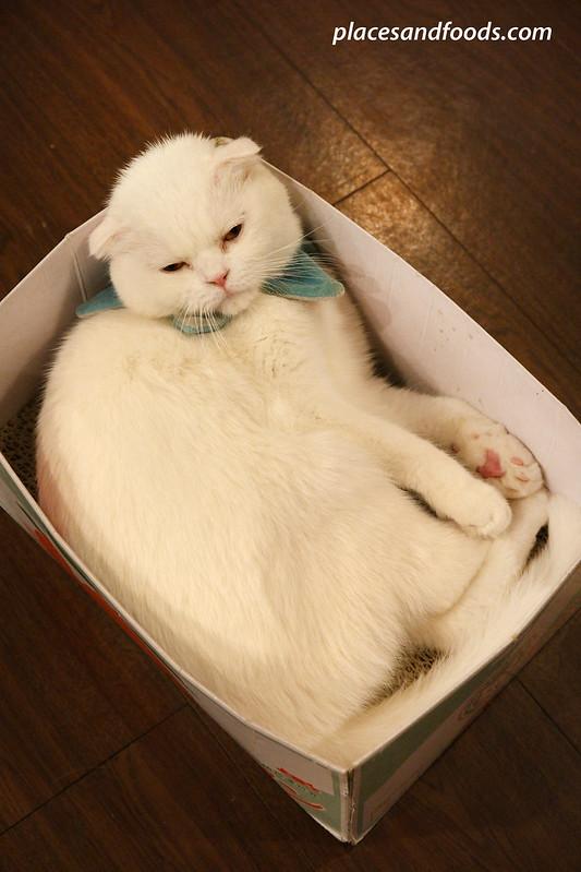 cat cafe playground seoul cat sleeping