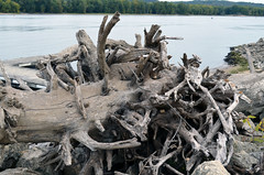 root, driftwood, wood, tree, plant, geology,