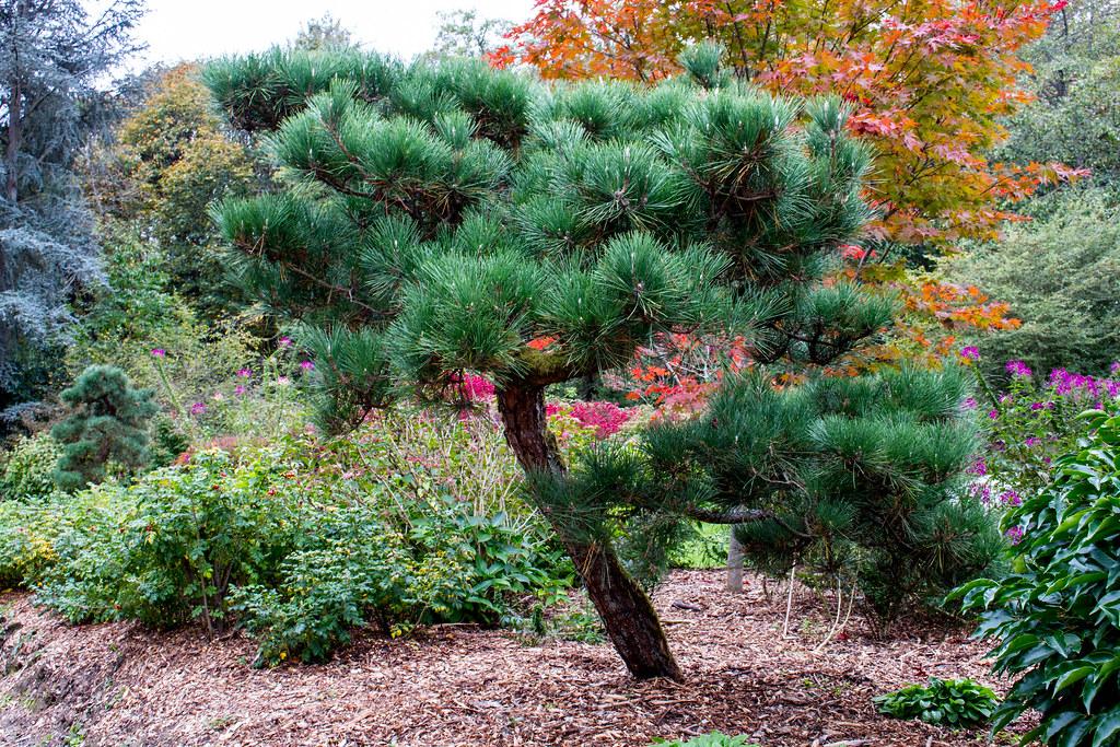 Kubota Garden 2015   chrisdisdero.com