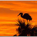 Bird's Eye View of Sunrise by mlibbe