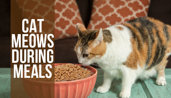 cat-meows-for-meals