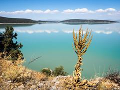 2014,Turquie,Lac Beyshehir