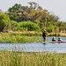Small photo of Mokoro Canoes