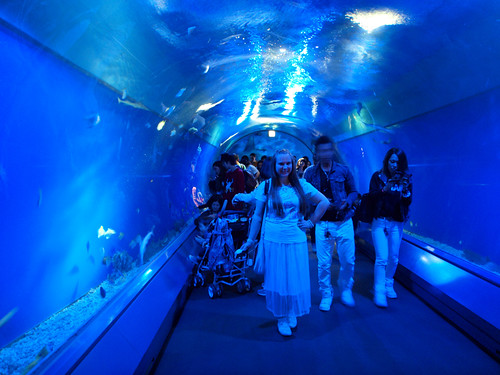 Shark Tunnel