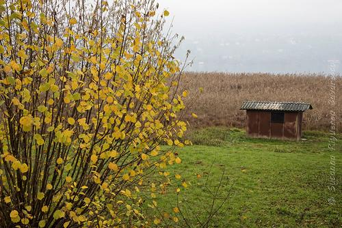 Lago di Annone Brianza: il capanno