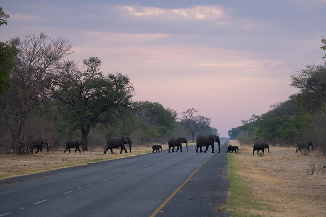 Morning elephants