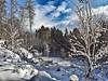 #Oberursel #taunus #winter #snow #winterwonderland #frostyforest