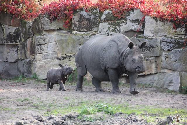 Sonntags-Besuch im Tierpark Friedrichsfelde 04.10.201551