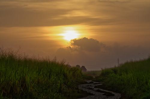 road sky cloud sun bird nature sunrise dawn outdoor horizon wideangle pole caribbean ricefield daybreak meandering trinidadandtobago caroni nikond5100