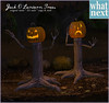 {what next} Jack O Lantern Trees for Fifty Linden Friday
