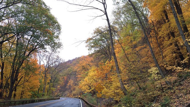 日, 2015-11-01 09:56 - Bat to Bear Trail (near Bear Mountain)
