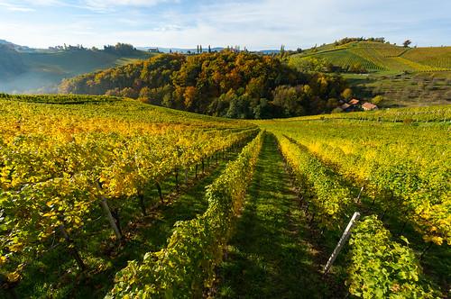 autumn landscape sony herbst vineyards 1018 landschaft f4 oss 2015 weinberge südsteiermark weinstrasse weingärten southstyria sonynex nex6 stermetzberg