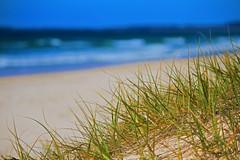 Brunswick Heads Beach Grass