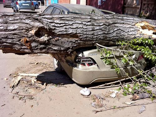 Шквальный ветер повалил более 50 деревьев в Москве и Подмосковье