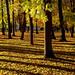 Autumn in Kadriorg by Bluesrose