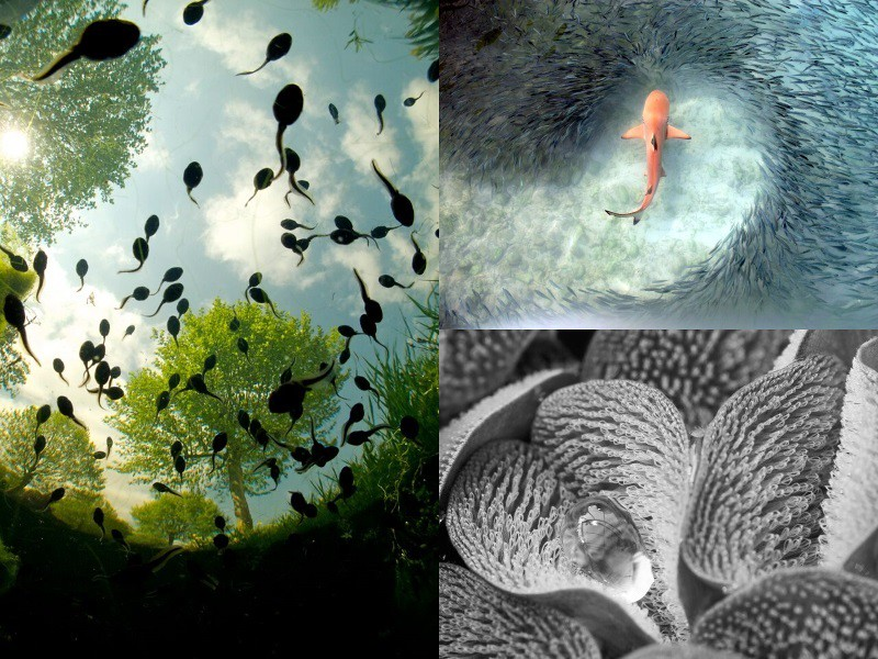 Category winners in the Royal Society Publishing photography competition 2015 image