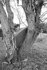 Panes Lane Cemetery Pinner