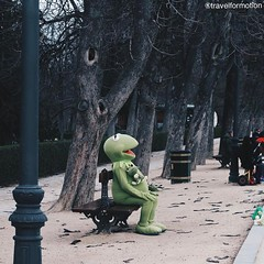 Just put a #smile on a #strangers #face #citylife in #madrid #streetphotography #photography #frog #vsco #vscocam #kermit #igmadrid #españa #igespaña #wanderlust #travel #travelgram #guardiantravelsnaps #park