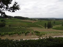Wijngaarden - Château Bélingard - Pomport