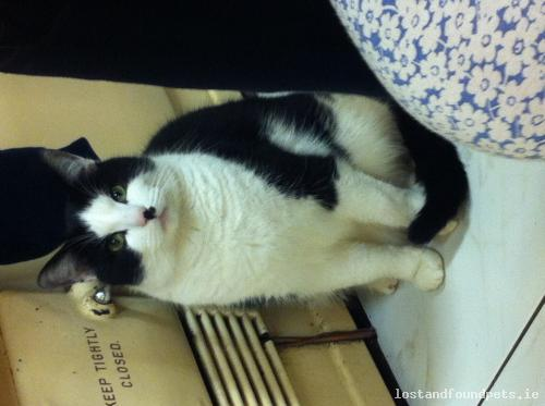 Sun, Aug 23rd, 2015 Lost Male Cat - Tullyvin - Roundabout, Castleblaney, Monaghan