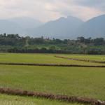 Di, 25.08.15 - 16:47 - Reisfelder