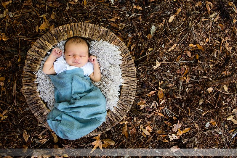 newborn baby nest