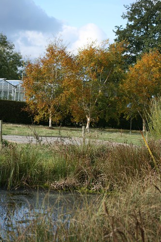 Autumn colour at Threave