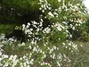 HMNF_FallWildflowers by usfs_Eastern_Region