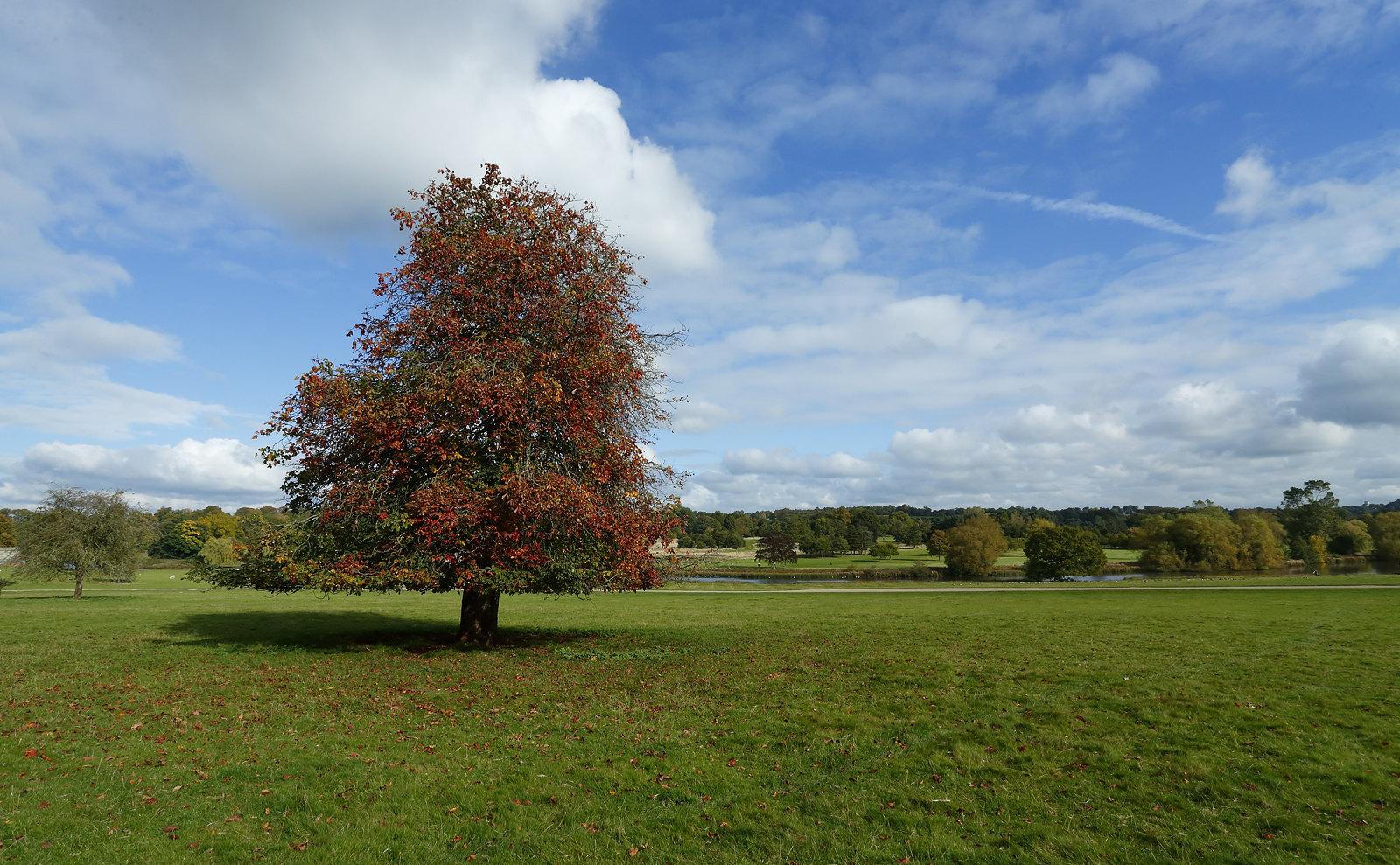 Kedleston Park