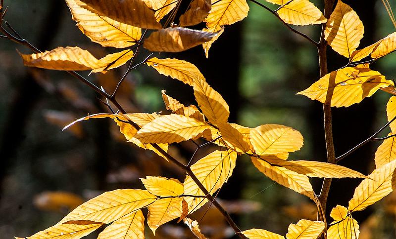 Hoosier National Forest - Charles C. Deam Wilderness Area - Grubb Ridge Trail - November 1, 2015
