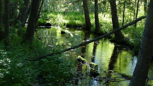 summer forest finland geotagged spring july brook fin 2015 kankaanpää satakunta 201507 kuninkaanlähde geo:lon=2252720833 20150701 geo:lat=6177474662