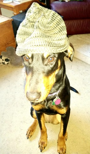 Doberman Puppy wearing handknit baby hat - Lapdog Creations