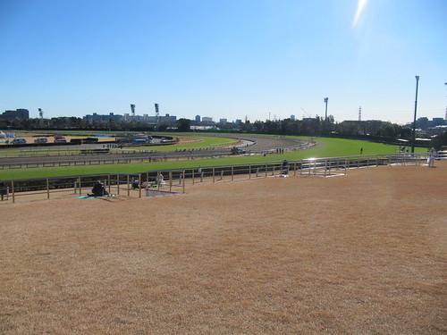 中山競馬場の芝スタンドの様子