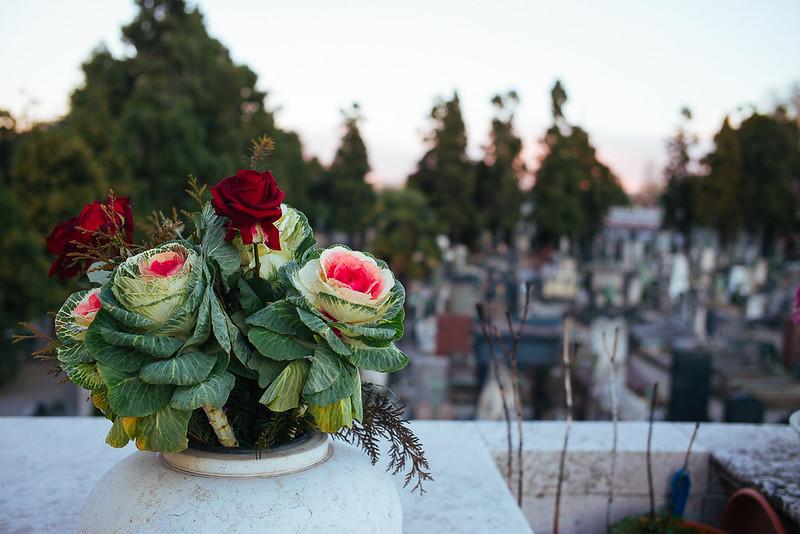La vita è forse poi questo: cavoli e rose