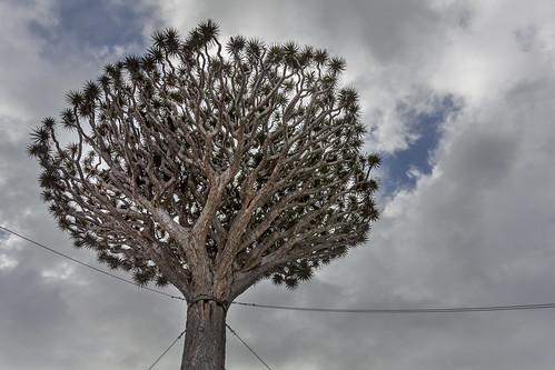 Tree On A Leash