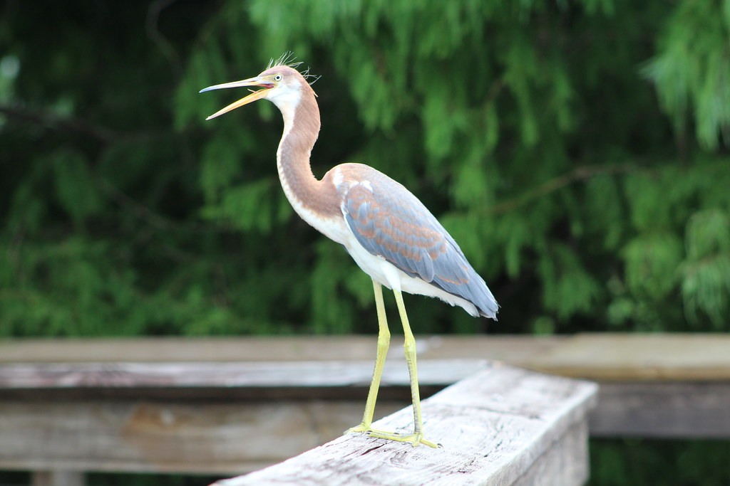 Wakodahatchee wetlands in Delray FL