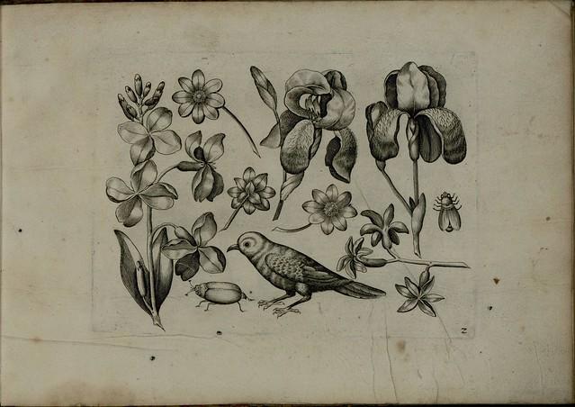 Viridarium Novum a
