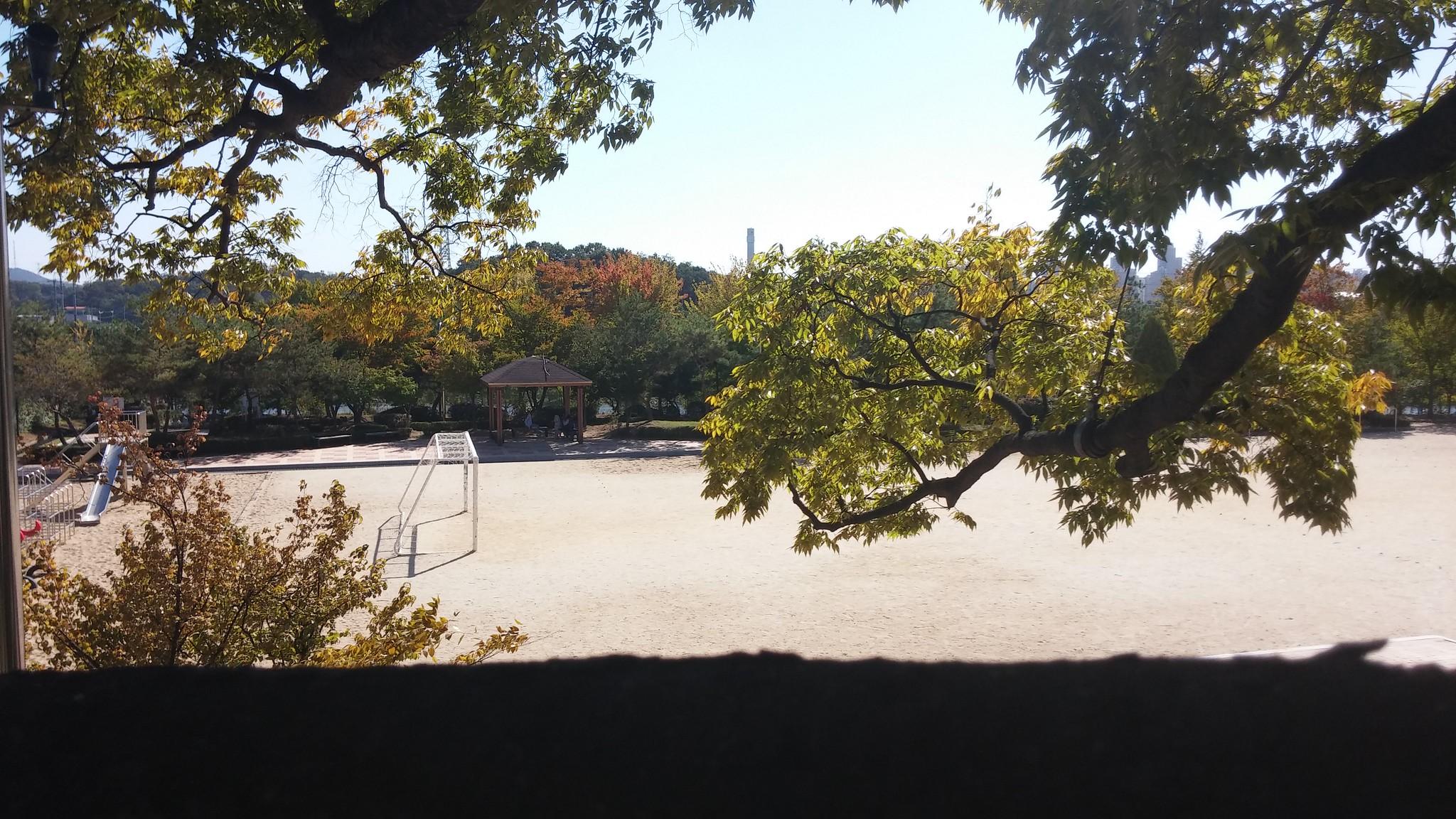 새금초 - 느티나무