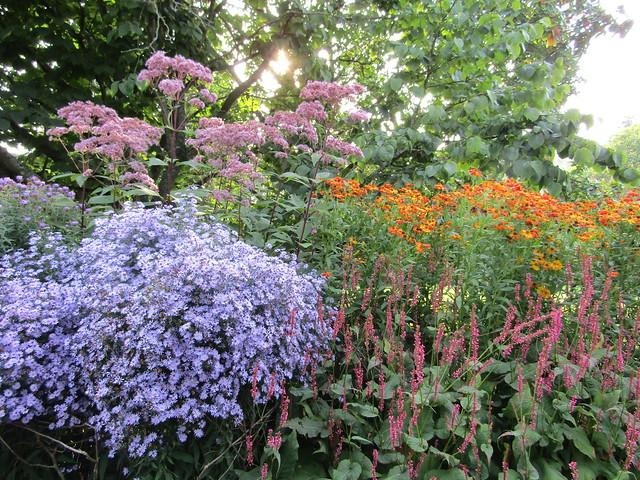 Rich autumn colours