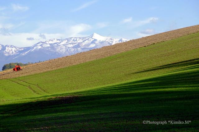 秋まき小麦の丘①